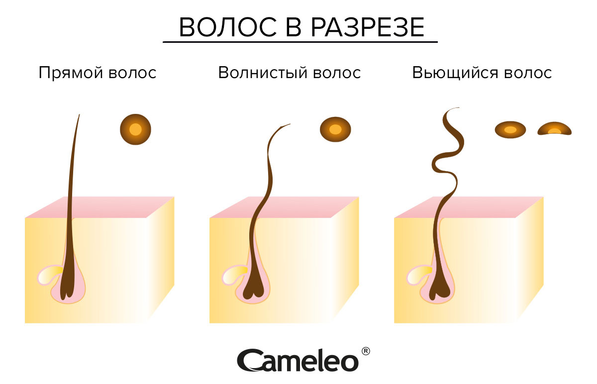 przekroj-ru